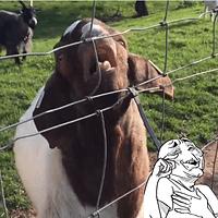 Tem alguns animais que são incríveis e outros que são bem bobos! Rache o bico assistindo essas trapalhadas animais!