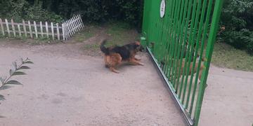Cachorro que late não morde!