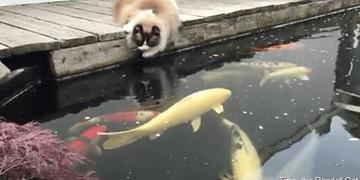 Eu quero comer peixe!!! Mia~