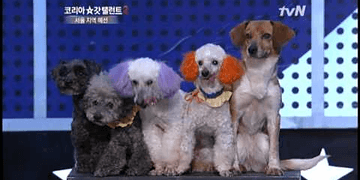 cute abandoned dogs. Won-yong Jung - Korea's Got Talent 2, 정원용 - 코리아갓탤런트2