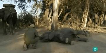 Grandes documentales La historia del elefante de pascua