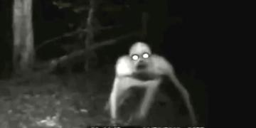 Criaturas paranormales CAPTADAS EN VIDEO! Real?! |TERROR